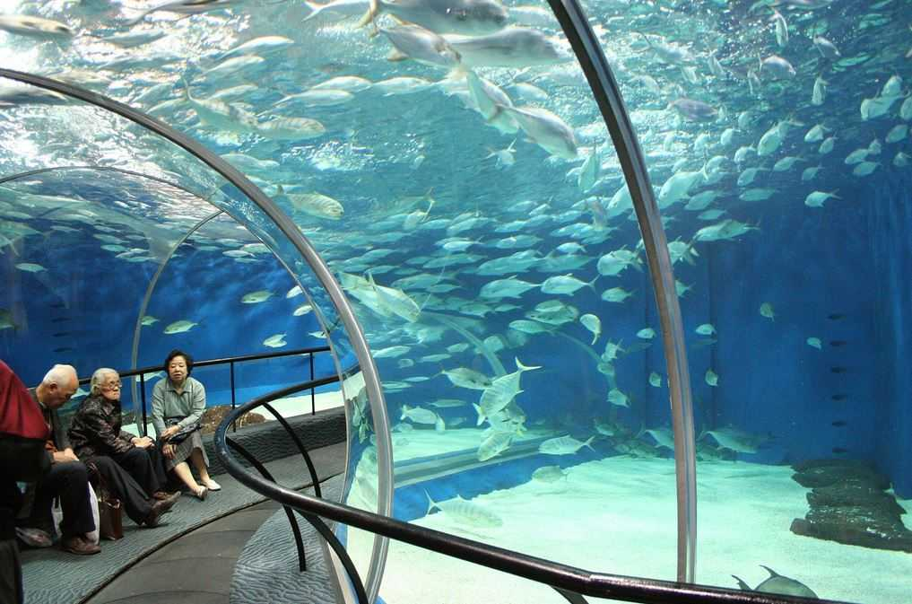 Top 10 largest aquariums in the world for Oceanic fish tanks