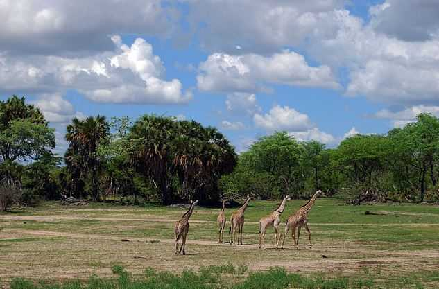 Top 10 Best Places to Visit in Tanzania - Traveloompa  Tanzania Famous Places