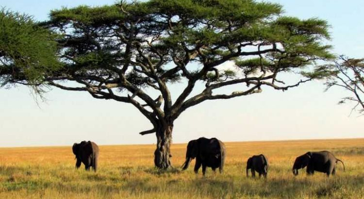 Serengeti National Park, Tanzania tourist attractions