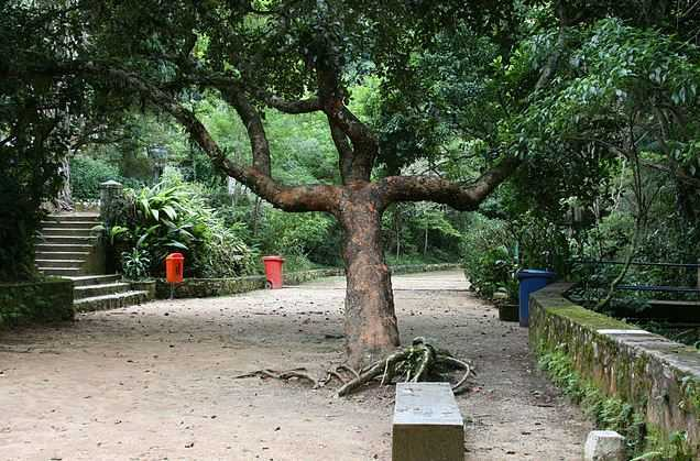 tijuca-national-park, places to visit in Rio de Janeiro