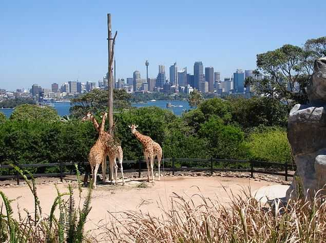 Things to do in Sydney, Taronga Zoo