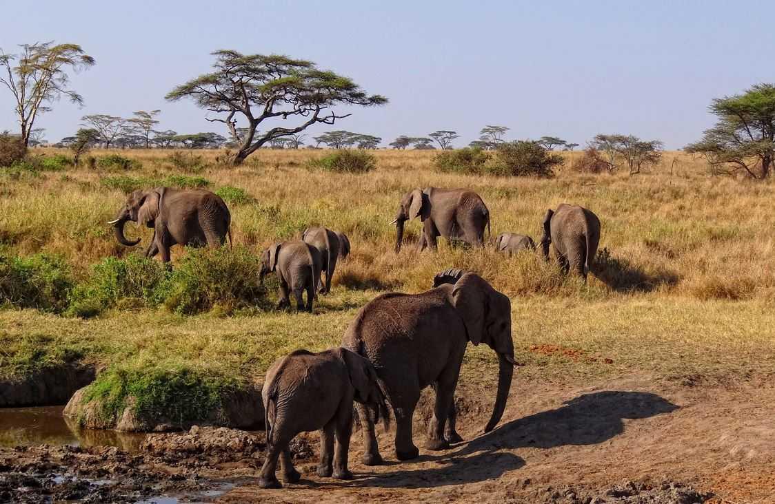 Top 10 Big Game Safari Destinations, Serengeti National Park