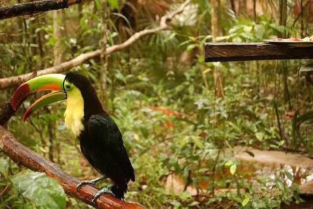 Top 10 Tourist Attractions in Belize, Belize Zoo