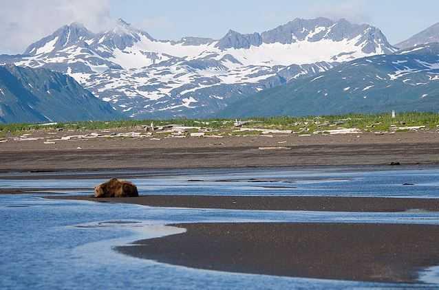 Top 10 Best Destinations for a Bear Safari, Katmai National Park