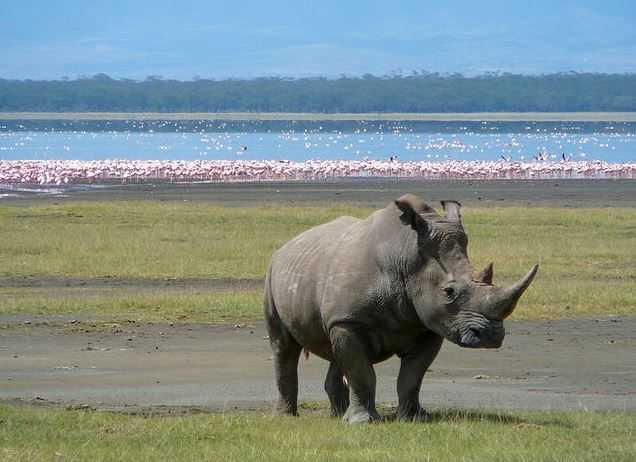 Top 10 Tourist Attractions in Kenya, Lake Nakuru
