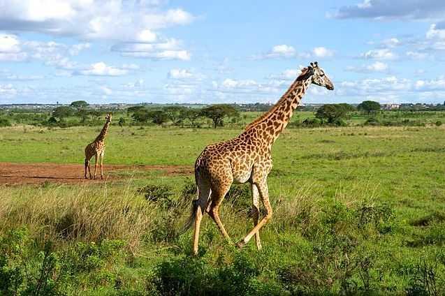Top 10 Tourist Attractions in Kenya, Nairobi National Park