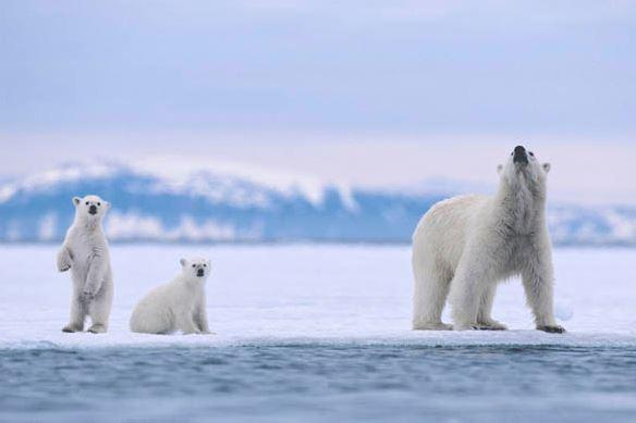 Top 10 Best Destinations for a Bear Safari, Svalbard Polar Bear Safari