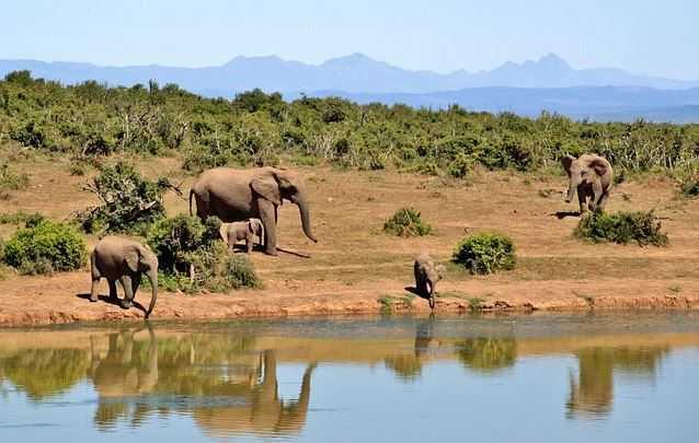 Top 10 Tourist Attractions in Kenya, Tsavo National Park