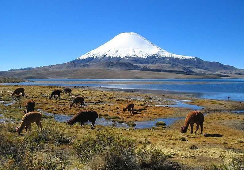 Lauca National Park, Chile travel