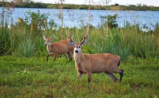 Top 10 Best Places to Visit in Argentina, Ibera Wetlands