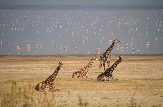 Lake Manyara, tourism in Tanzania