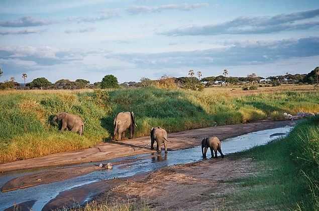 Tarangire National Park, visit Tanzania