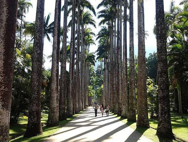 jardim-botanico, what to do in Rio de Janeiro