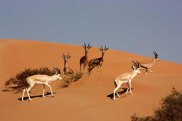 Dubai Desert Conservation Reserve, balloon flights